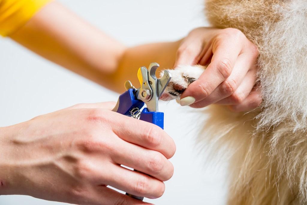 dog grooming nails