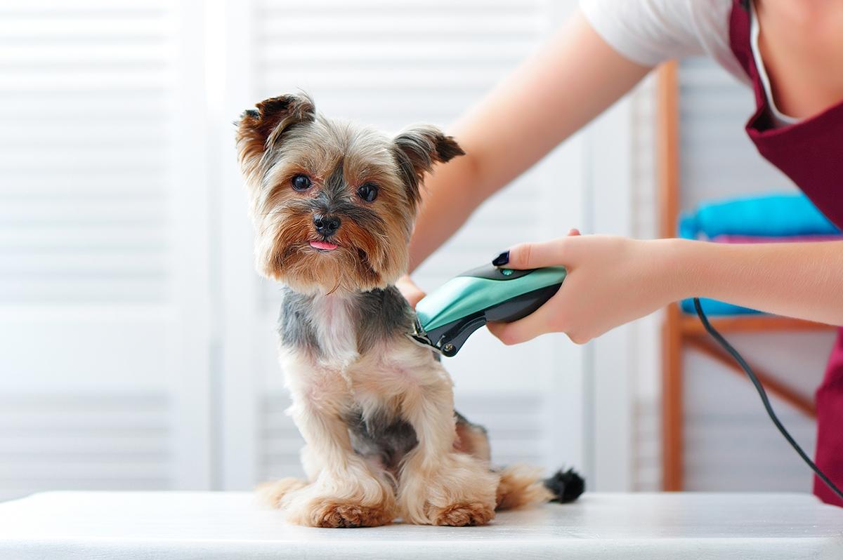 Mobile Dog Grooming - Dog Grooming Hobart