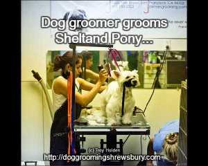 Dog grooming meme