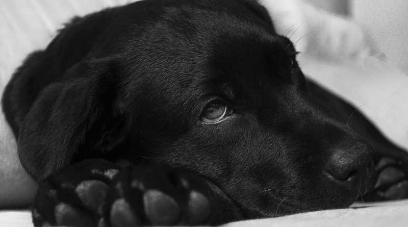 Die Erkältung und der Hund
