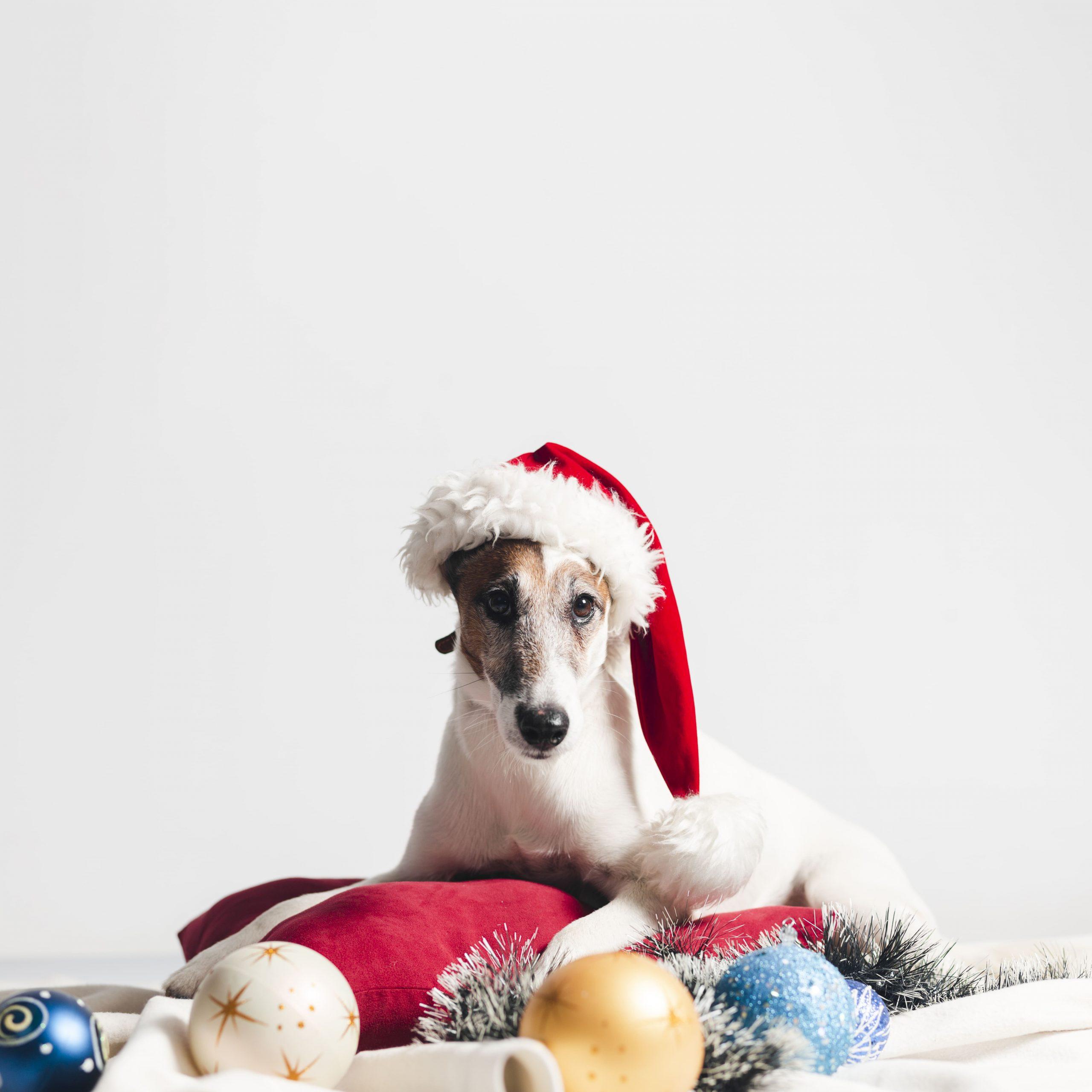 8 tips para celebrar el año nuevo con tu perro