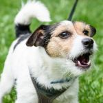 The Commands of Dog Barking