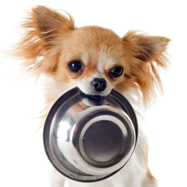 What Is The Best Puppy Food For Your Dog's Age?