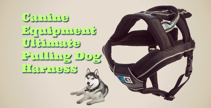 Sled Pulling Amp No Pull Harnesses For Huskies