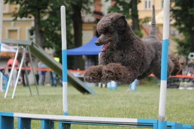 agility-skok-w-dal