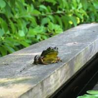 Our dear friend, Tiny