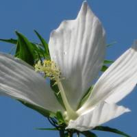 Green Healing ~ Recalling a Horticultural Summer