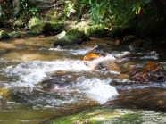 moving water lifts the spirit