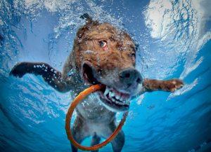 Dogs Underwater Stills 10