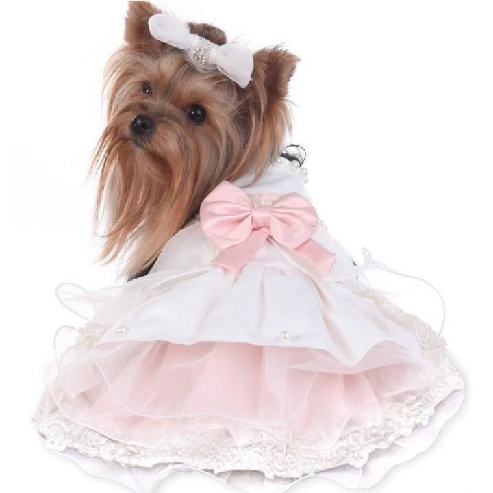 Wedding-dog-photos