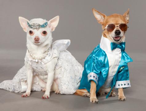 cute-dog-wedding-pics