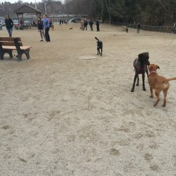 lakewood dog park2