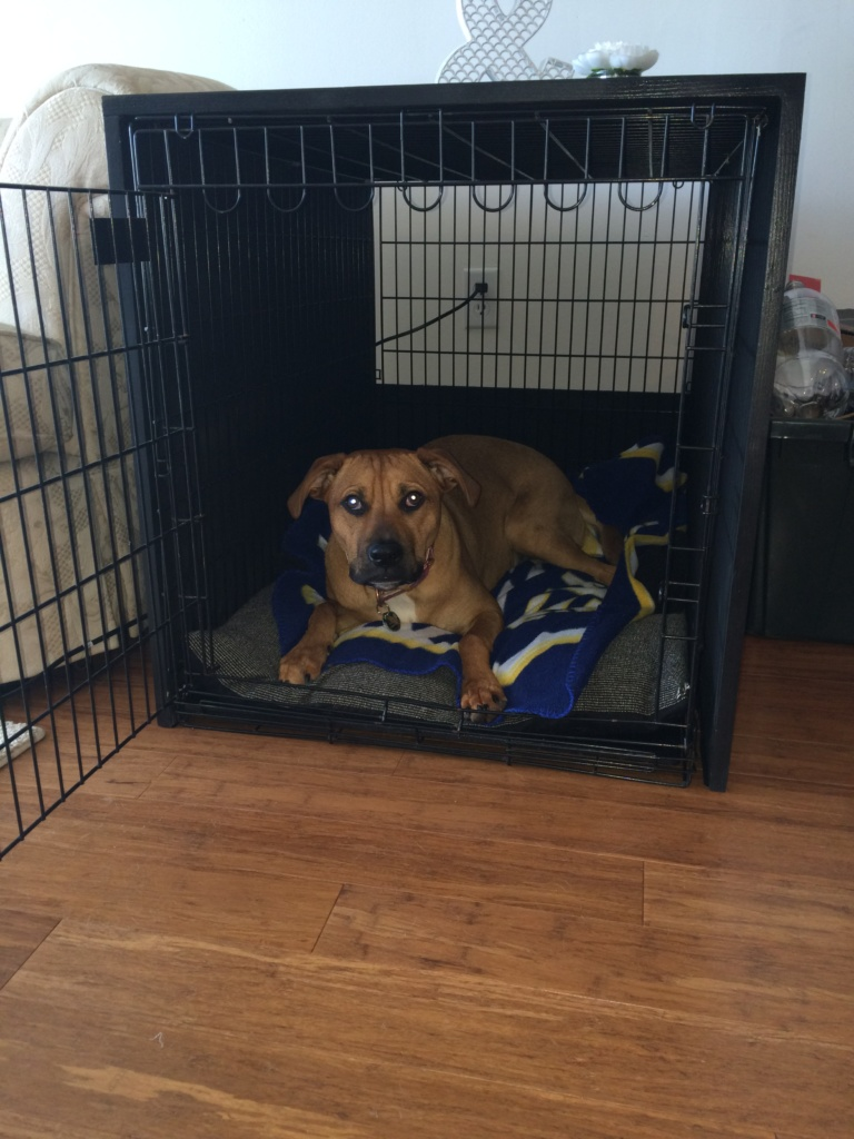 dog crate table 5
