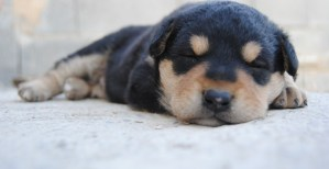 5 Tips - Dog puppies get house-trained