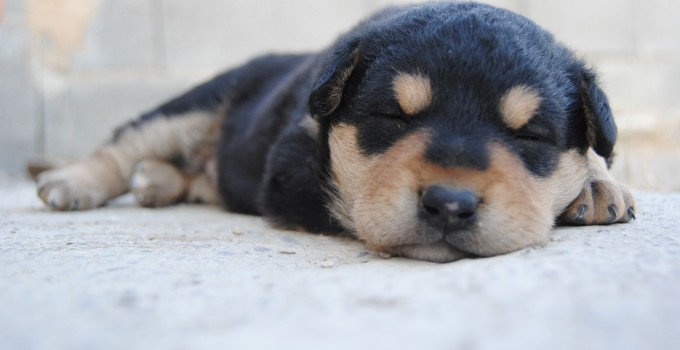 5 Tips – Dog puppies get house-trained – and smoothly