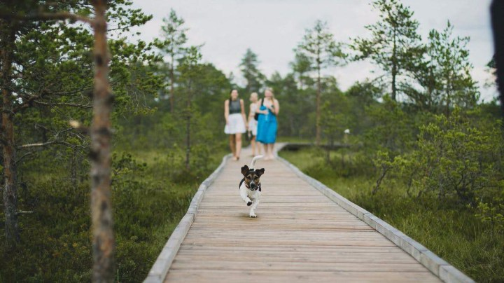 paseo_dogminancia