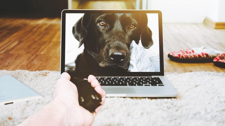 Encantadores de perros_dogminancia