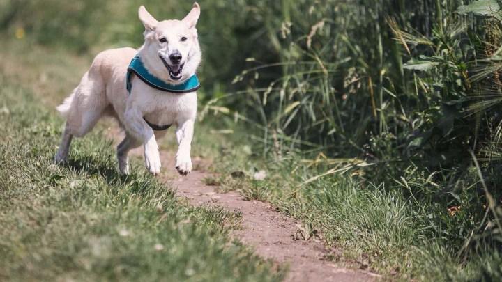 Perro no hace caso_dogminancia