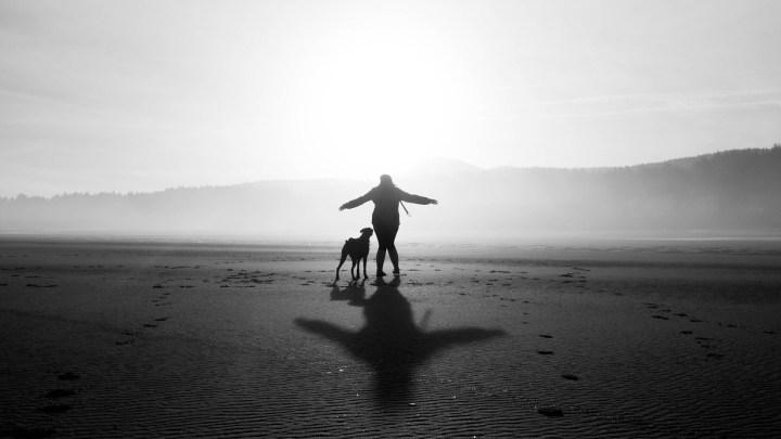Dogminancia_respeto perros
