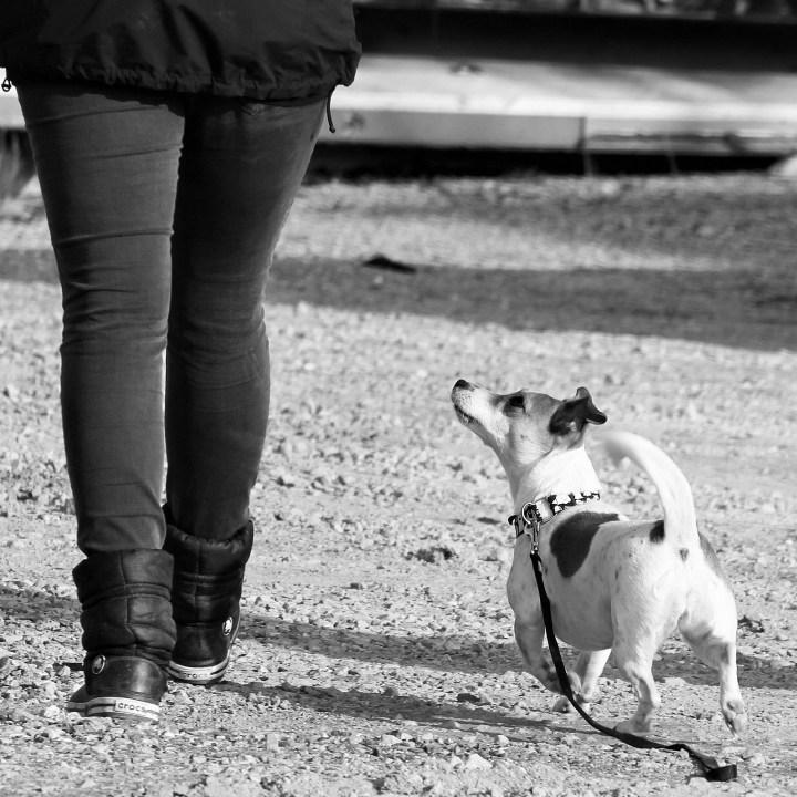 Educación canina_dogminancia