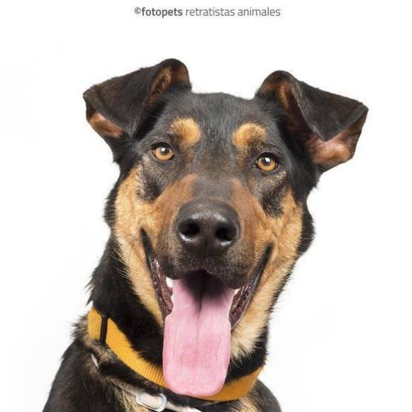 Perro Perro_Dogminancia