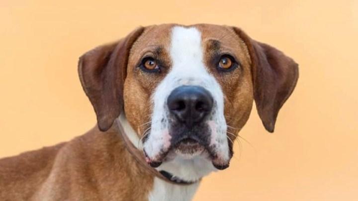 problemas físicos perros-dogminancia