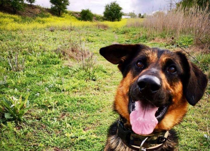 Covid-19 y perros