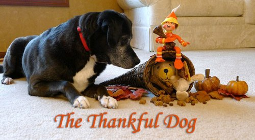 The Thankful Dog