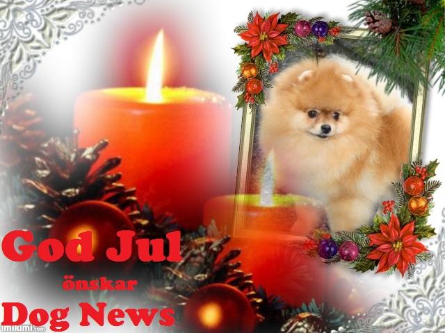DogNews.jpg