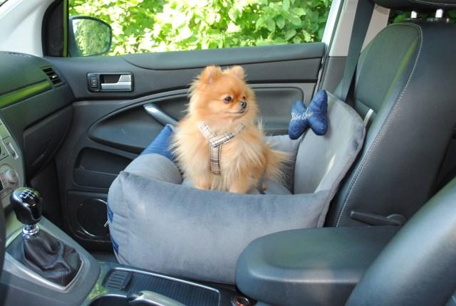 LUcy i bilen.jpg