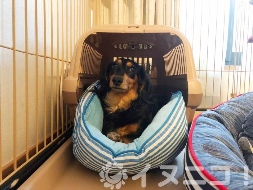 犬の地震への必須準備「しつけ」