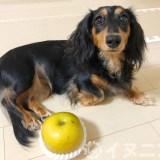 【保存版】犬は梨を食べても大丈夫です【皮、種、芯はNG、量に注意】