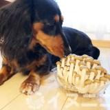 【結論】犬はしめじを食べても大丈夫。栄養豊富です【生はNG】