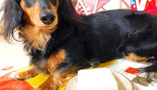 【保存版】犬は豆腐を食べても大丈夫です【メリットや給与量も解説】