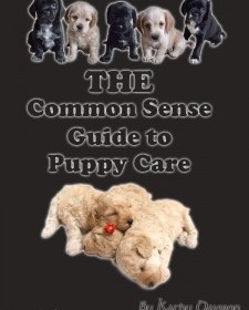http://dogobediencetrainingguides.net/the-common-sense-guide-to-puppycare-2