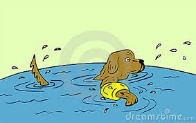 dog-swimm