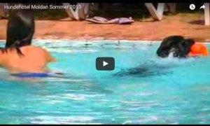 Video-Hundehotel-Moldan-Sommer-2013