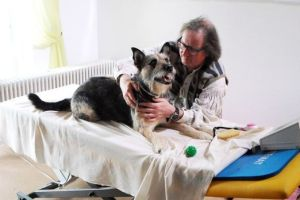 moldan-hund-massageliege copyright SAT1