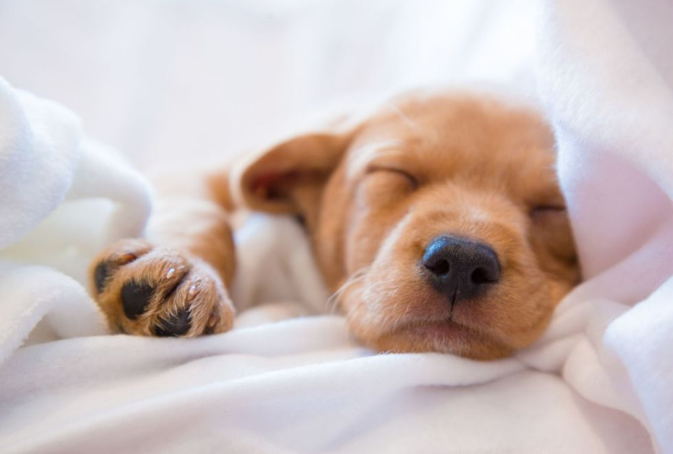 How do I get my puppy to sleep longer? - dogpackr