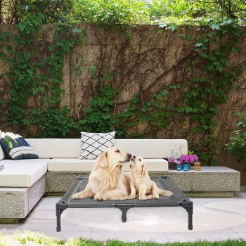 best elevated dog beds