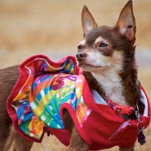 Maxine Dog Rescue
