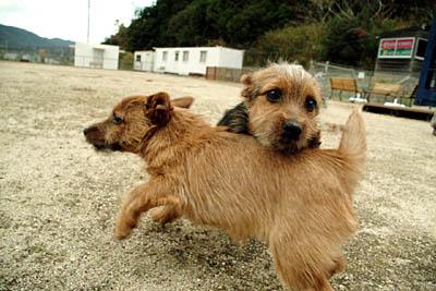 南あわじドッグラン  飛行犬撮影所