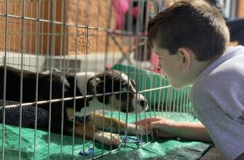 Children Calm Shelter Dogs by Reading to Them