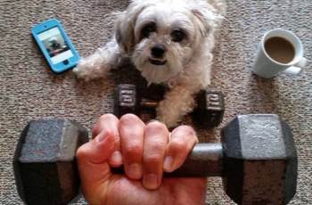 Fun Methods to Exercise Your Dog