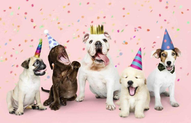 Dog birthday celebration. Mark dog milestones.
