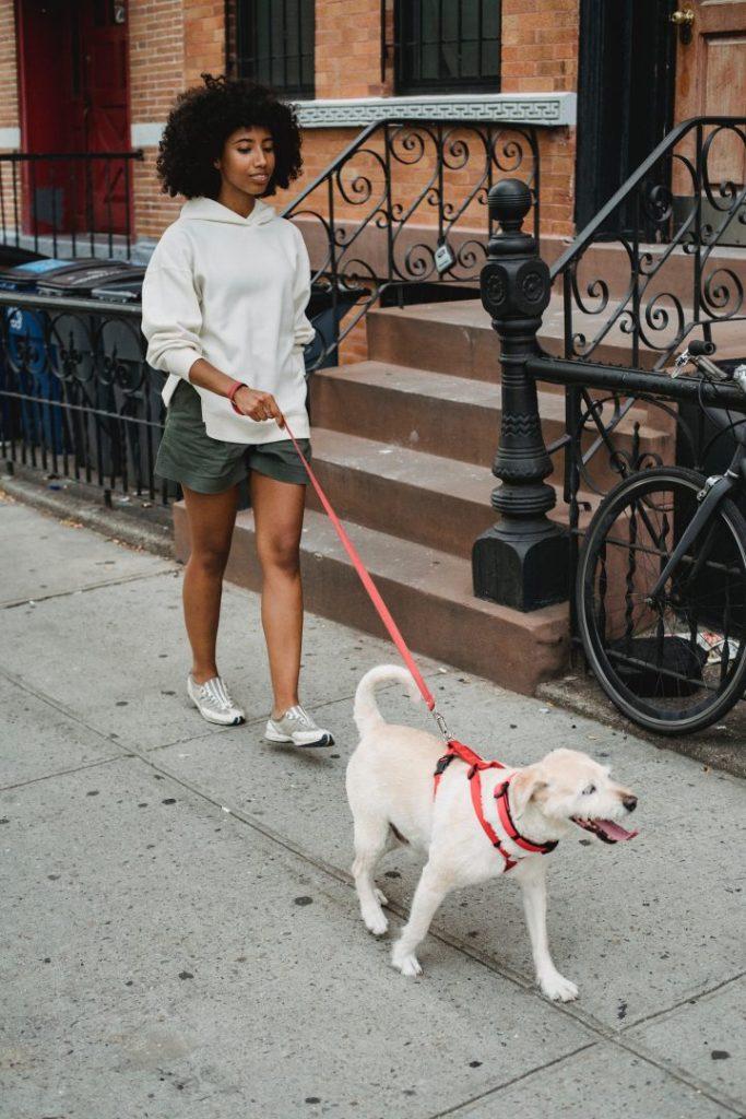 dogs deserve it favorite dog walking spots