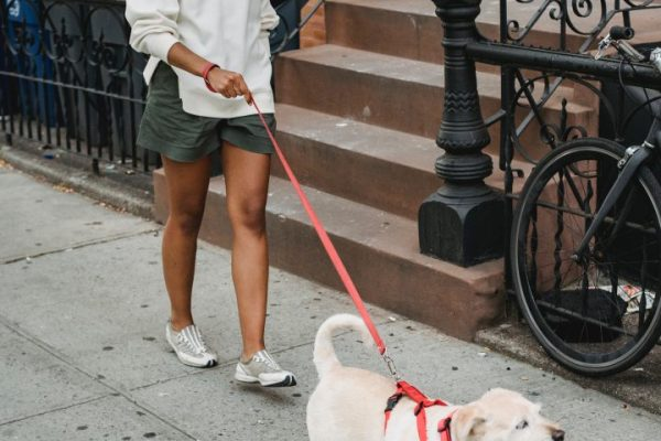 dogs deserve it favorite dog walking spots