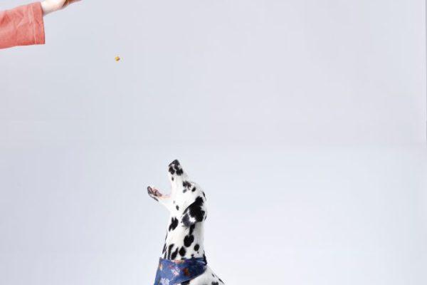 best-dog-walkers