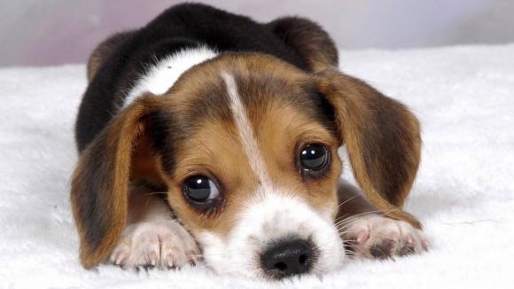 Training Your Puppy training your puppy! start with the basics Training Your Puppy! Start with the Basics Puppy1 580x326