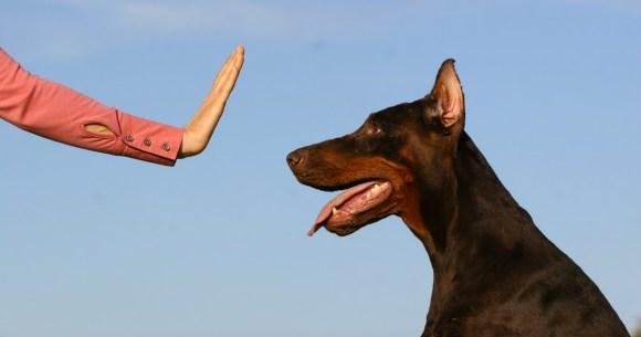 Dogs Training Tips